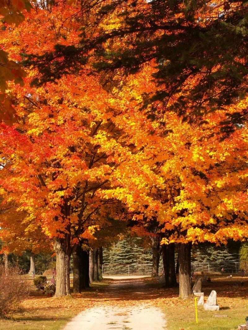 Fall Color Tours in Grayling MI | Grayling Visitor's Bureau