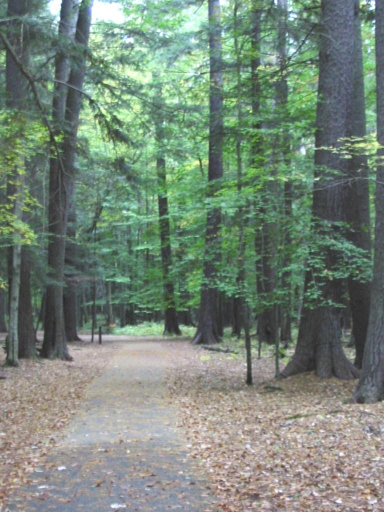 trails in grayling mi