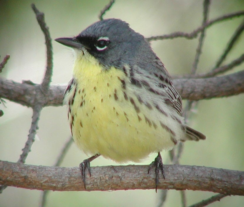 Birdwatching in Grayli...