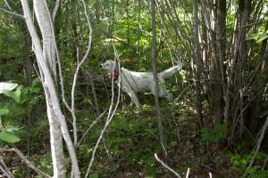 Hunting in Grayling MI