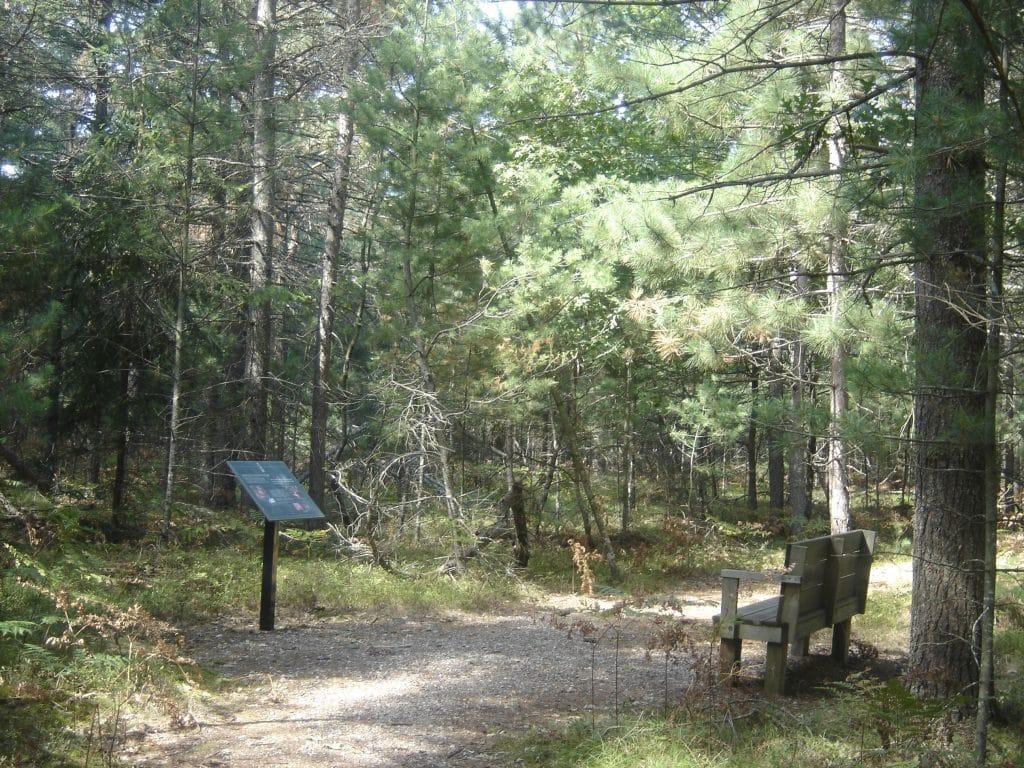 Historic Beal Tree Plantation