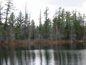 Glory Lake - North shore