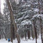 XC Ski conditions 12/22/16