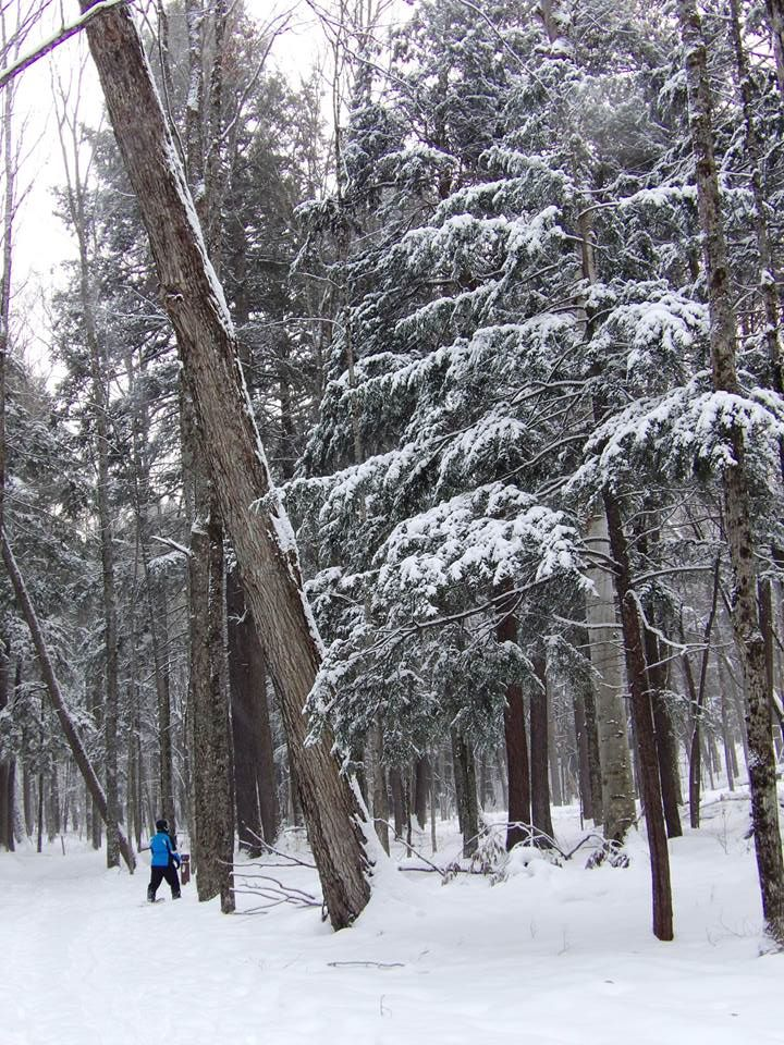 XC Ski Conditions 3/9
