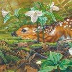 fawn by artist Kim Diment