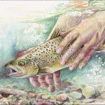 fish by artist Kim Diment